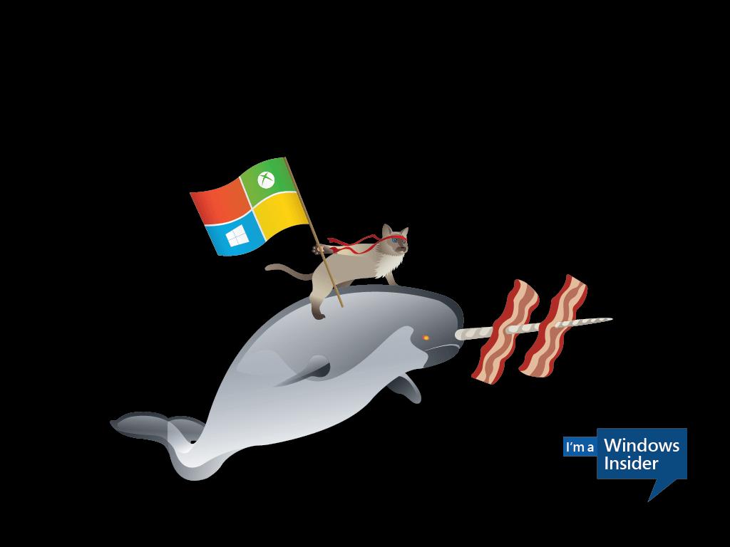 Windows_Insider_Ninjacat_Narwhal