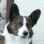 Profilbild von arthur