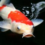 Profilbild von eink0i